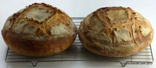 Bread made with Semola di grano duro rimacinata (l) and pudding semolina (r)